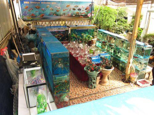 Fish & Flower Market