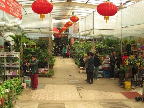 Nanhu Flower Market in Shenyang